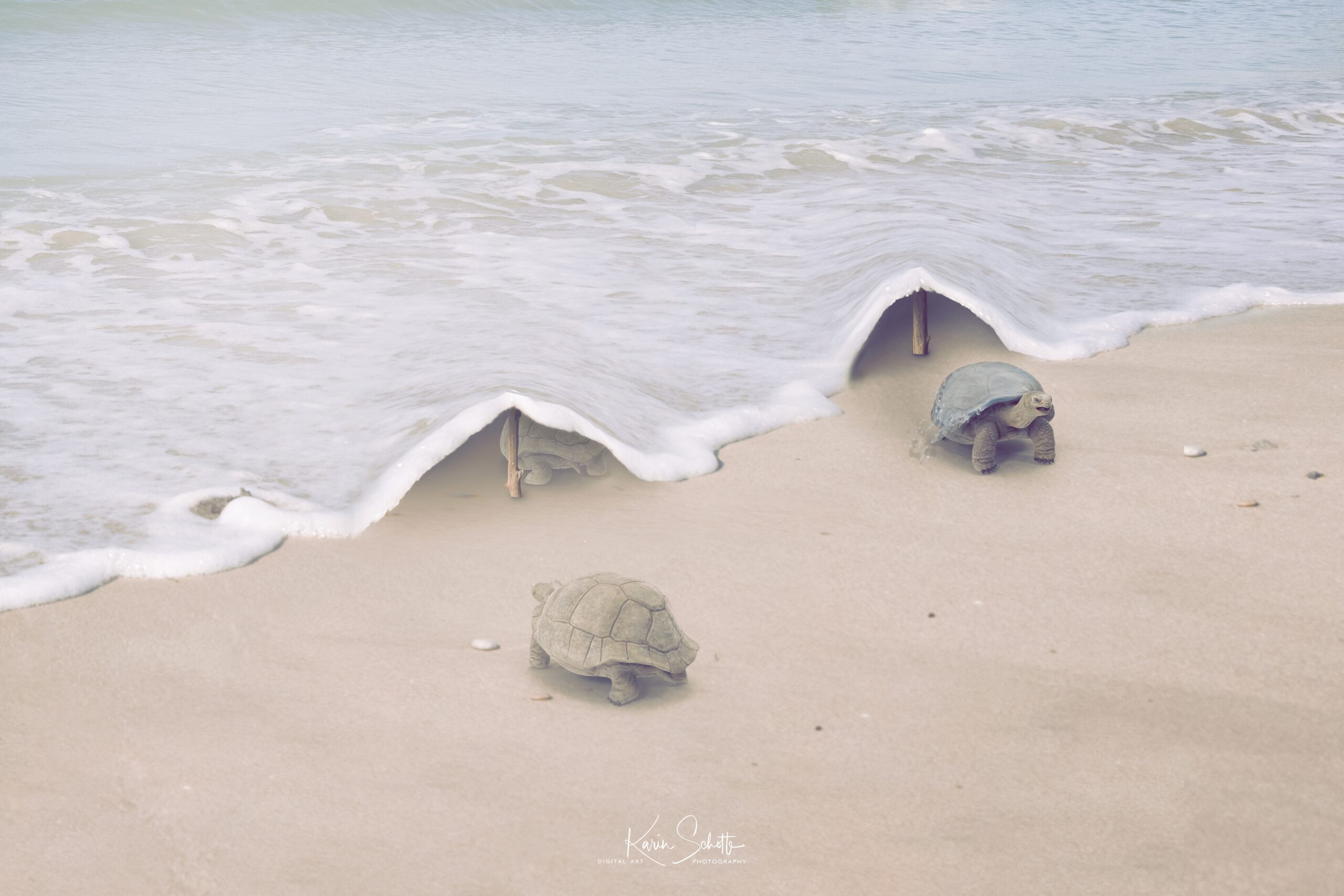 Turtle Play